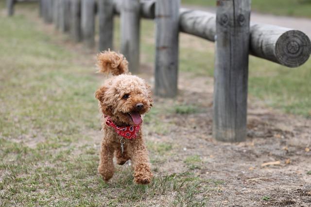 perros-para-personas-mayores
